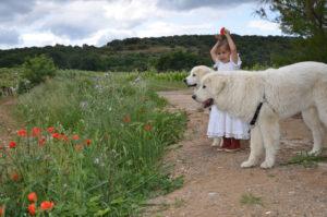 celeste chiens